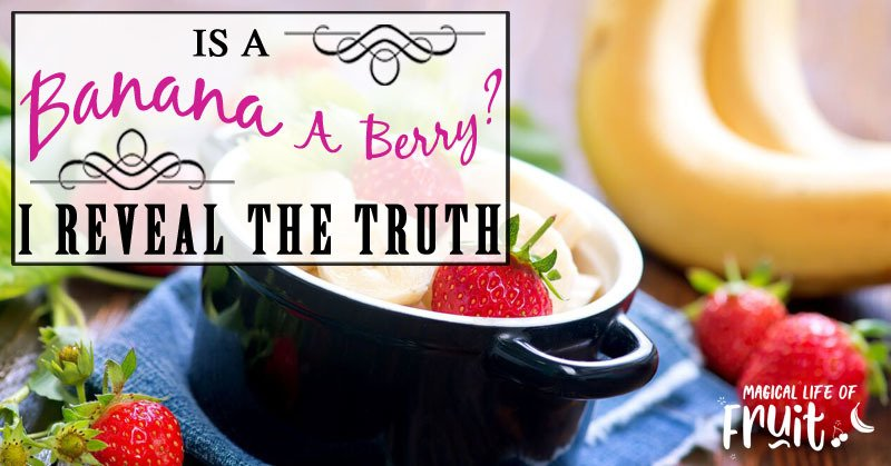 Is A Banana A Berry? I Reveal THE TRUTH